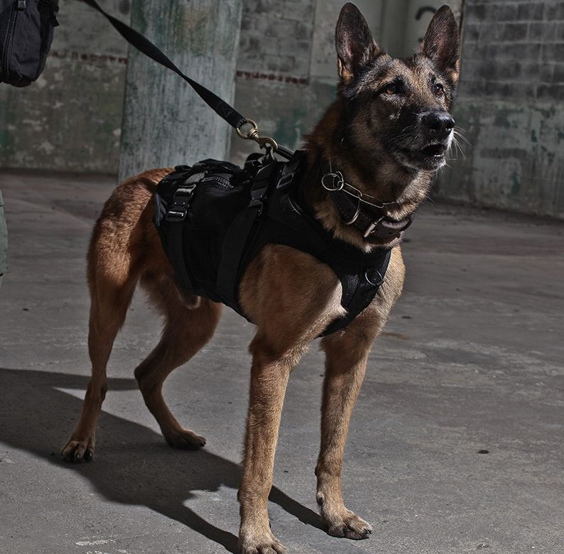 LBT-K9-Harness